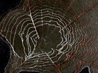Паутина в природе и художник АДО из Гюмри